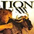 lion_feat_1